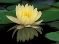 The significance of a Guru